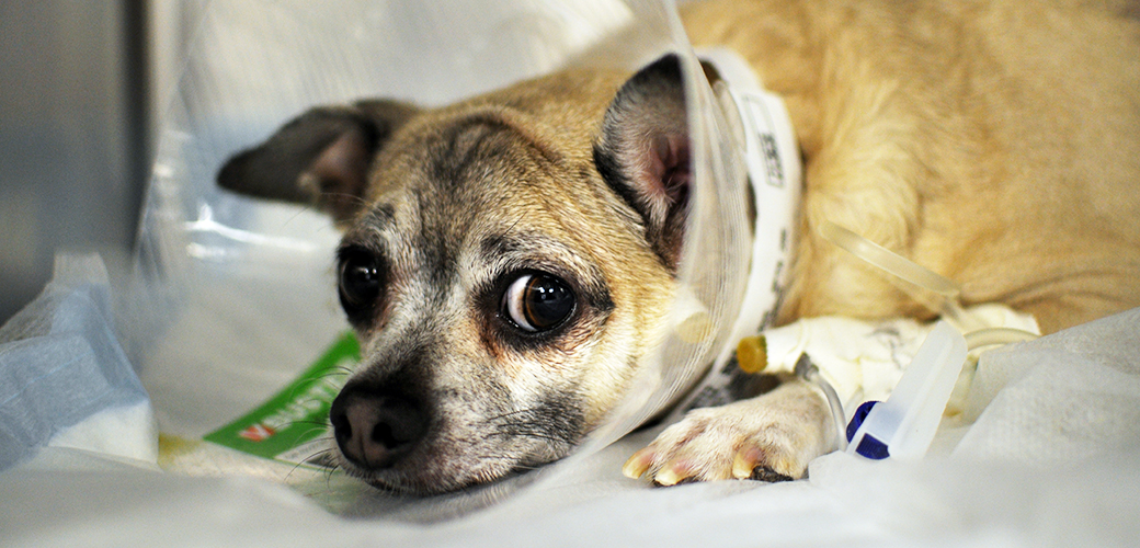 pet-care_emergency-care-for-your-pet_main-image