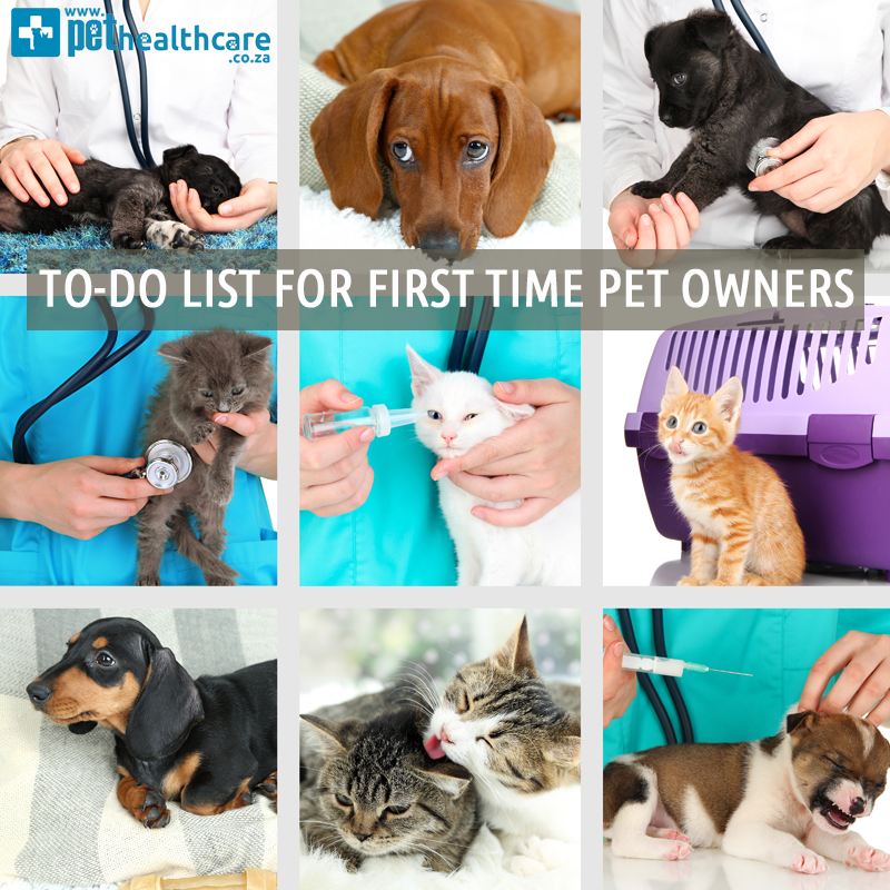 Pet-Safety-Home-checklist-first-time-home-buyer-first-time-pet-owner-2