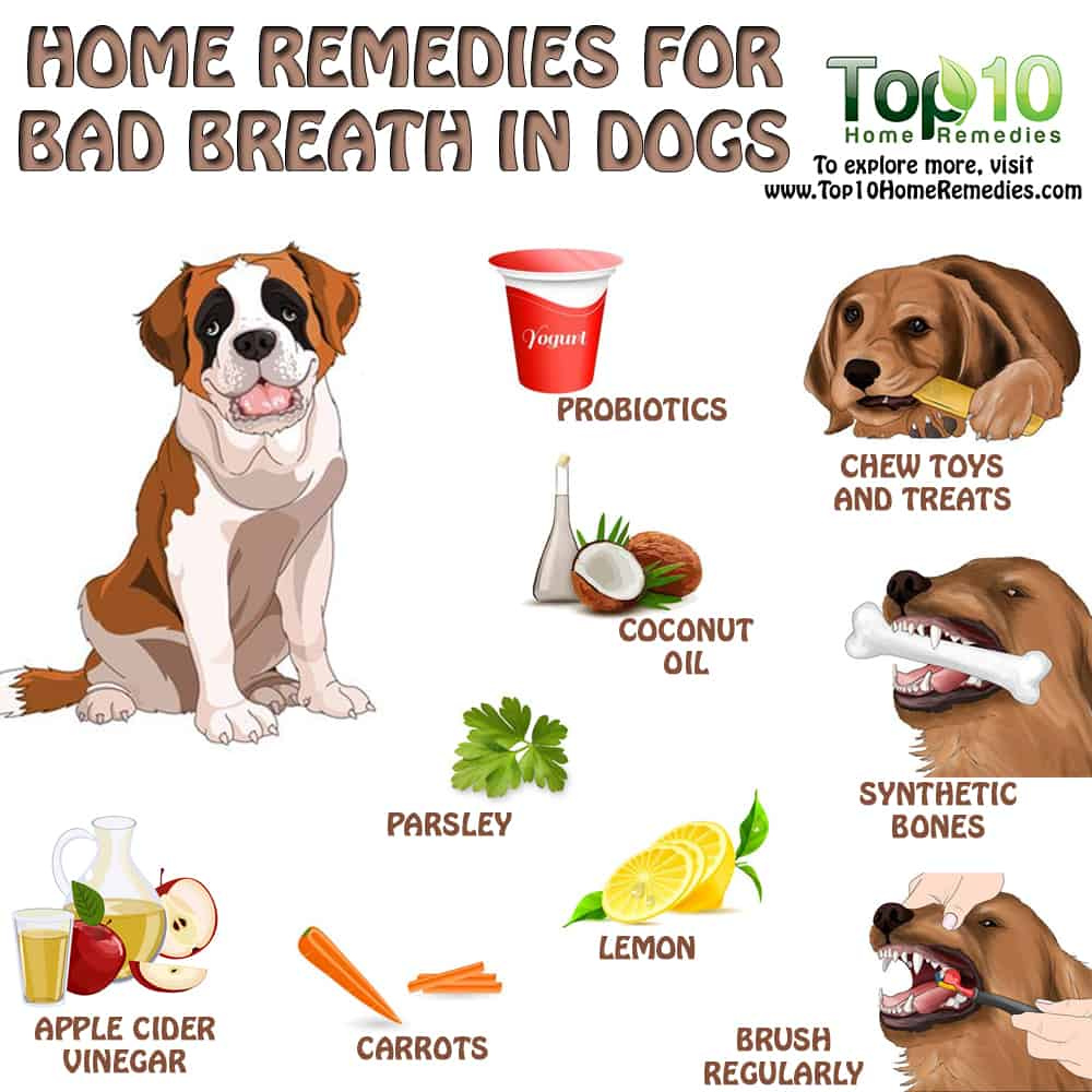 home-remedies-for-bad-breath-in-dogs-main