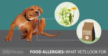 Does-your-dog-have-food-allergies
