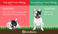 dog-food-allergy_large