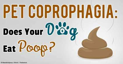 pet-coprophagia-fb