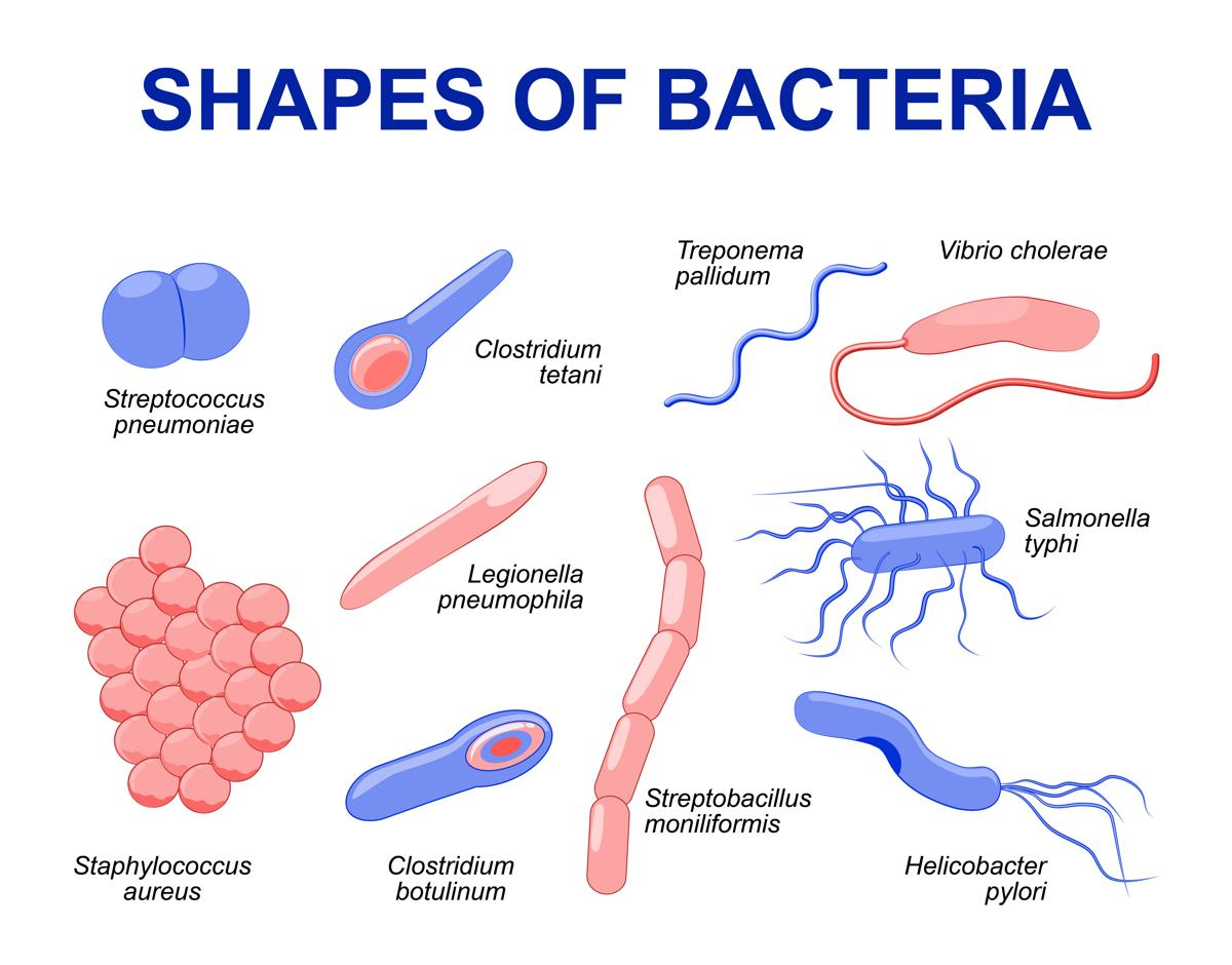 1200-94798069-shapes-of-bacteria