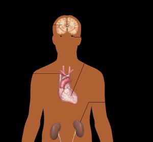 anatomy-of-the-human-body-1279987-300x277