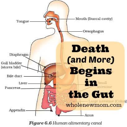 Death-Begins-in-the-Gut-Wmk