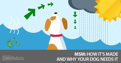 MSM-How-Its-made-and-why-your-dog-needs-it