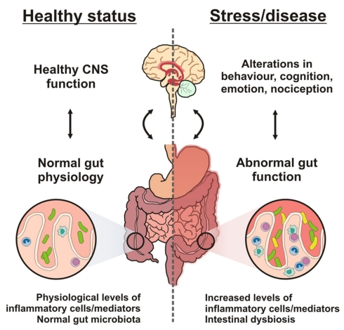 Brain-gut-microbe-communication-in-health-and-disease-A-stable-gut-microbiota-is