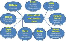 Effects-of-free-radicals-on-different-organs-of-human