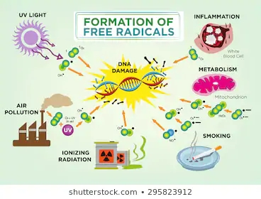 formation-free-radicals-diagram-concept-260nw-295823912