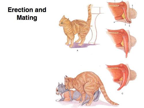 cat_mating1