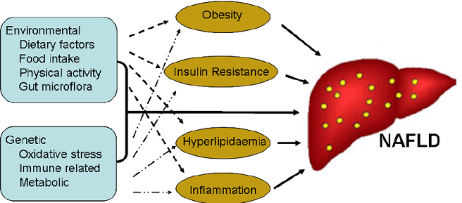 Genetic-and-environmental-factors-associated-with-non-alcoholic-fatty-liver-disease