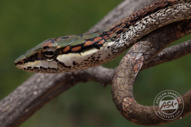 Twig_Snake_3_web (1)