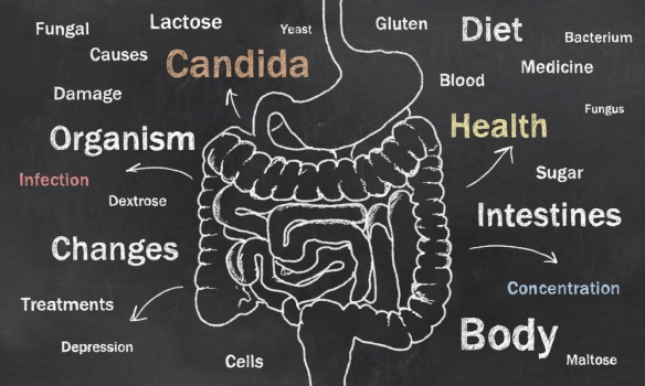 Candida-Intestines
