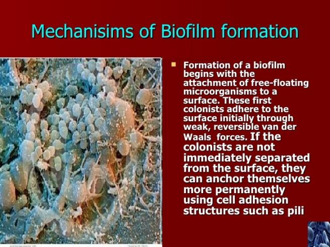 biofilms-9-728