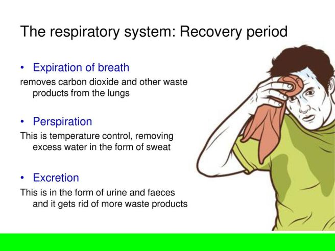 The+respiratory+system_+Recovery+period
