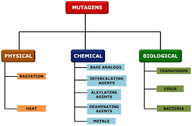 mutagens-types.png