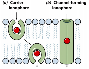 carrier-vs-channel-ionophore