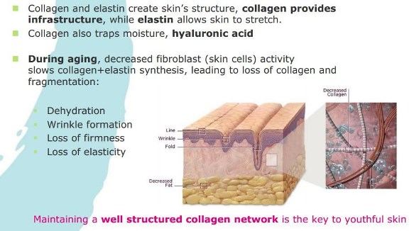 collagen_extra_image3_583x326